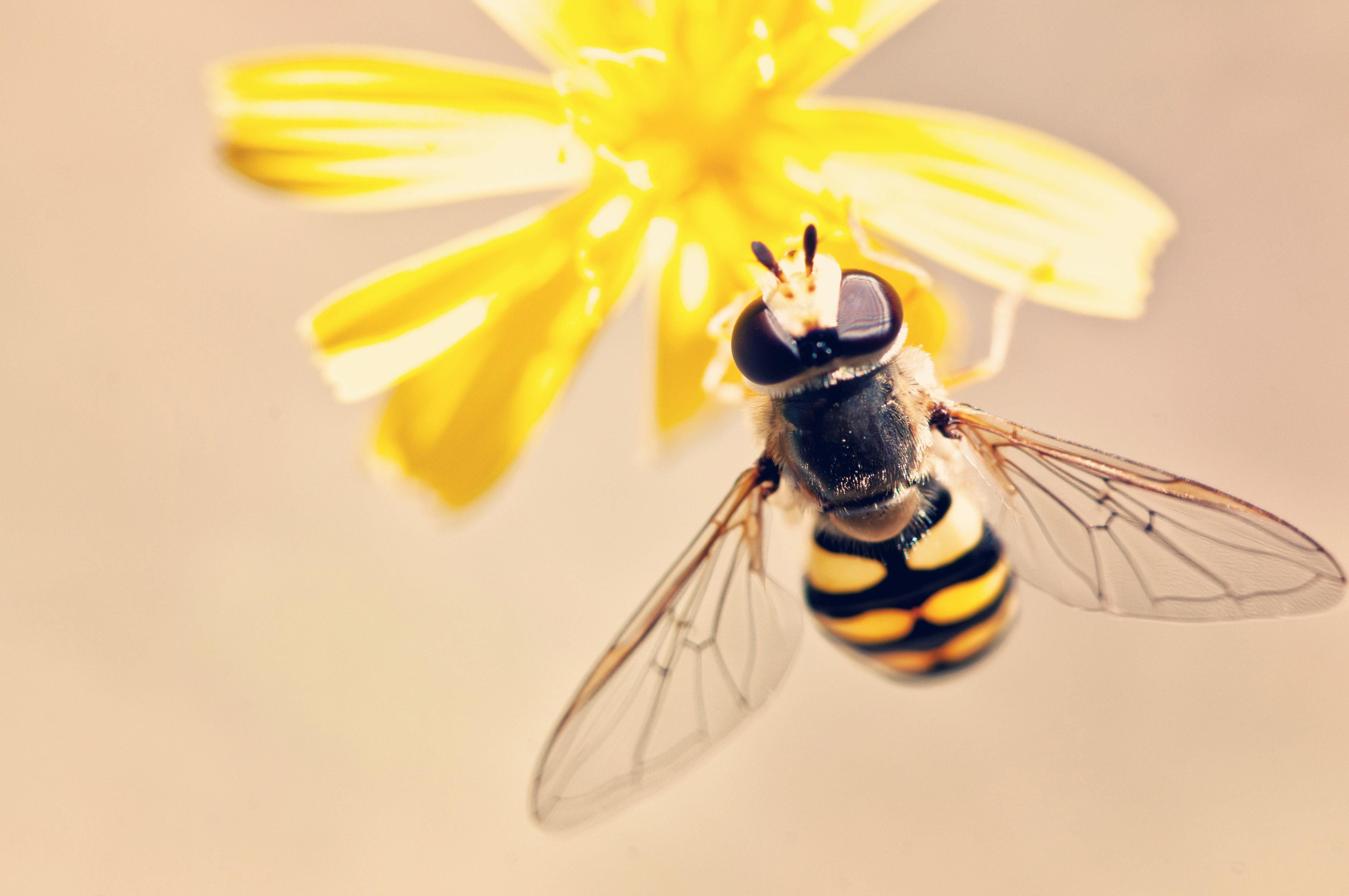 antenna-bee-bloom-395241