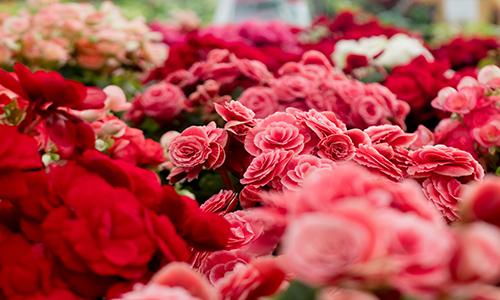 assorted-beautiful-bloom-698884 (1)