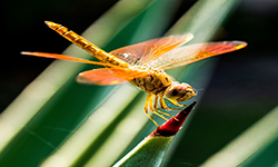 close-up-dragonfly-insect-60031