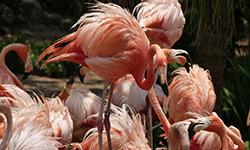 flamingo-65560_1920 (1)