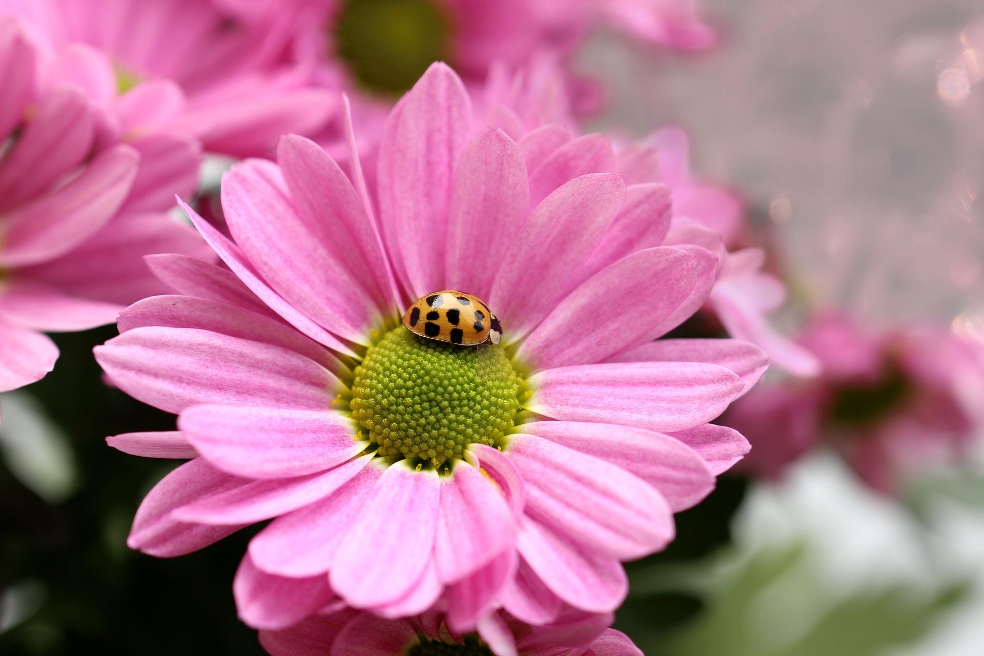 flower-3828016_1920