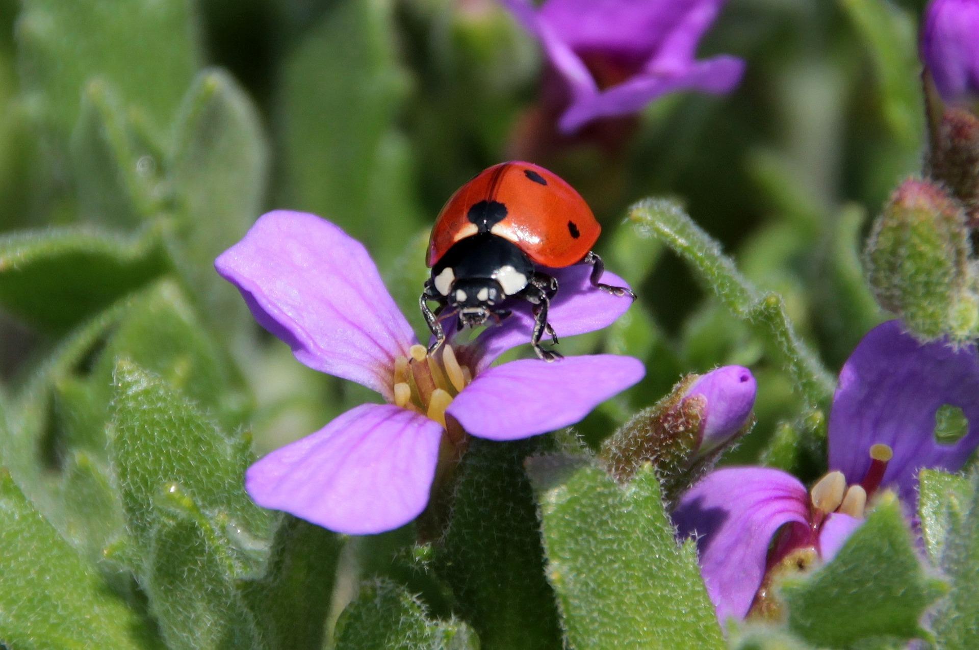 ladybug-1328828_1920