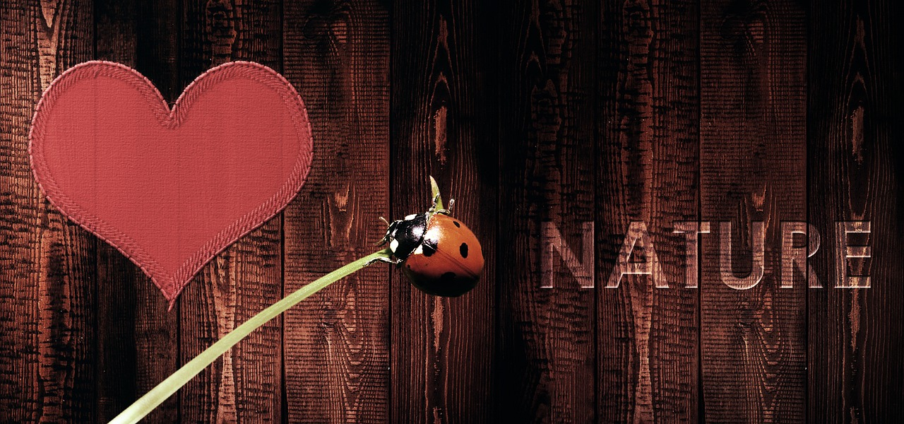 nature-2654560_1280 (1)