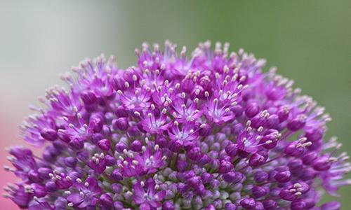 purple-1739212