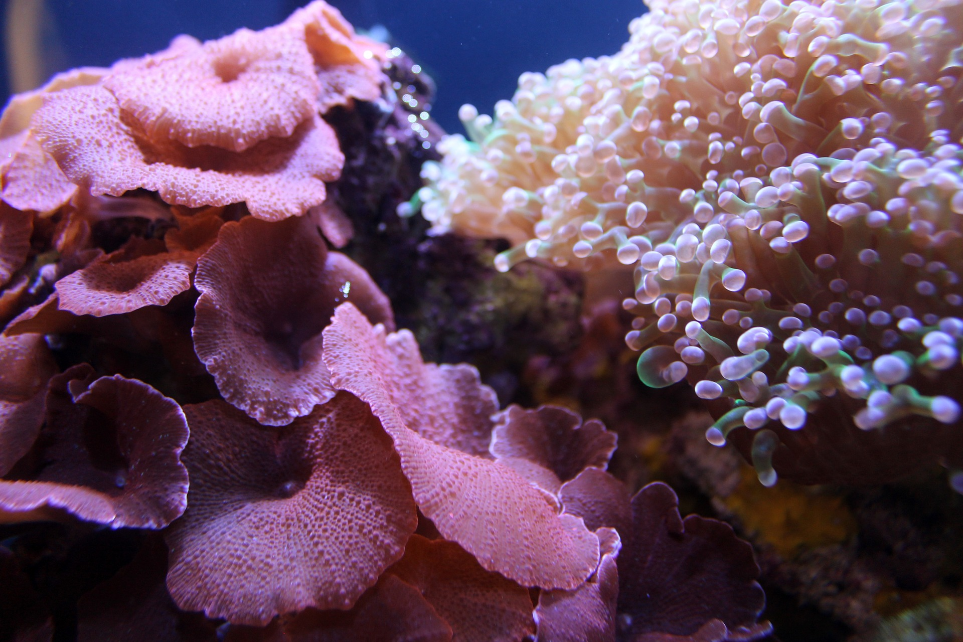 coral-1598212_1920